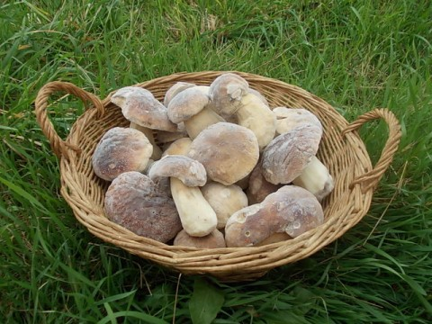Frozen Porcini Mushrooms (whole)  gr. 500 / lb. 1,1 - ONLY OFFLINE STORE
